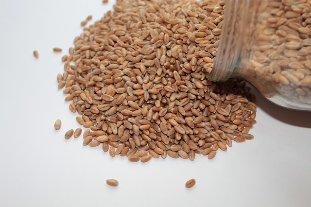 obilná semínka na bílém podkladu